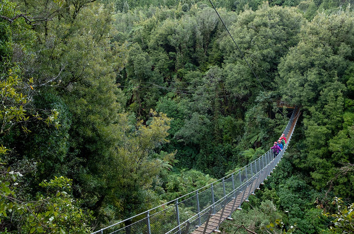 Enjoy three amazing suspended swing bridges and journey high above the canopy