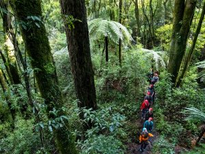 Group-walking-through-forest