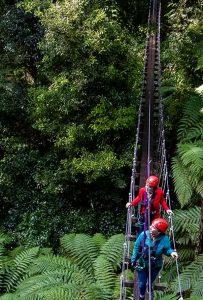 Women-on-swing-bridge-above-forest