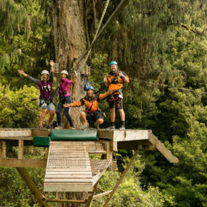 guides-on-platform-up-tree-in-forest