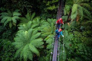 Get a photo on the Silver Fern swingbridge on the Original Canopy Tour