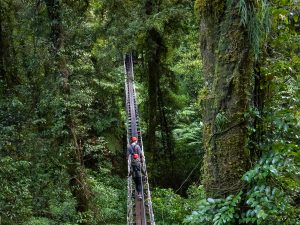 Forest-adventure-rotorua