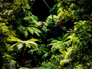 Man-smiling-on-zipline-with-forest-behind