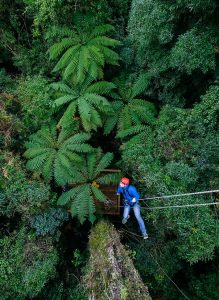 Man-abseiling-from-tree-above-forest