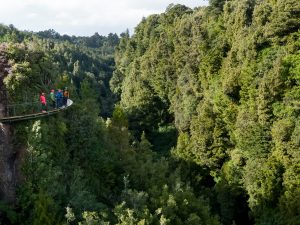 Group-of-people-on-cliff-walk-above-forest