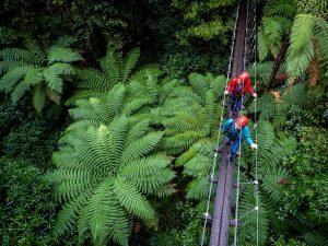 Two-women-above-forest-on-swingbridge