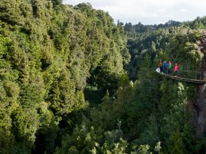 Grouo-of-people-on-walkway-above-forest