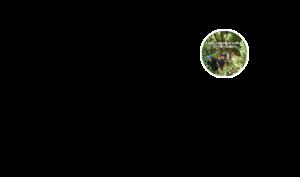 Best New Zealand north island forest ziplining tour