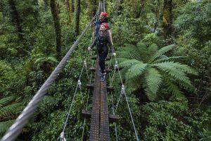 Rotorua-Original-Canopy-Tour