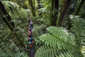 forest-walk-rotorua