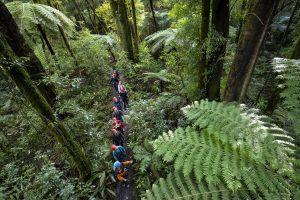 tree-walk-rotorua-canopy-tours