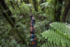 tree-walk-rotorua-canopy-tours-min