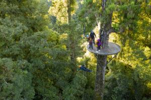 Ultimate Rotorua Zipline