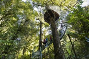 Forest Adventure Rotorua Experience