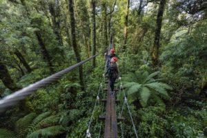 Rotorua Canopy Tours Zipline Fun