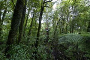 Tree Top Swing Adventure