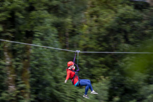 Native Forest Zipline Experience