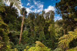 Rotorua-canopy-tours-zipline-adventure