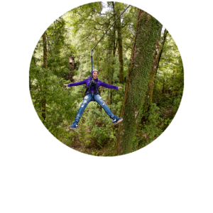 Fly Down The Final Flutter Back To The Forest Floor Min