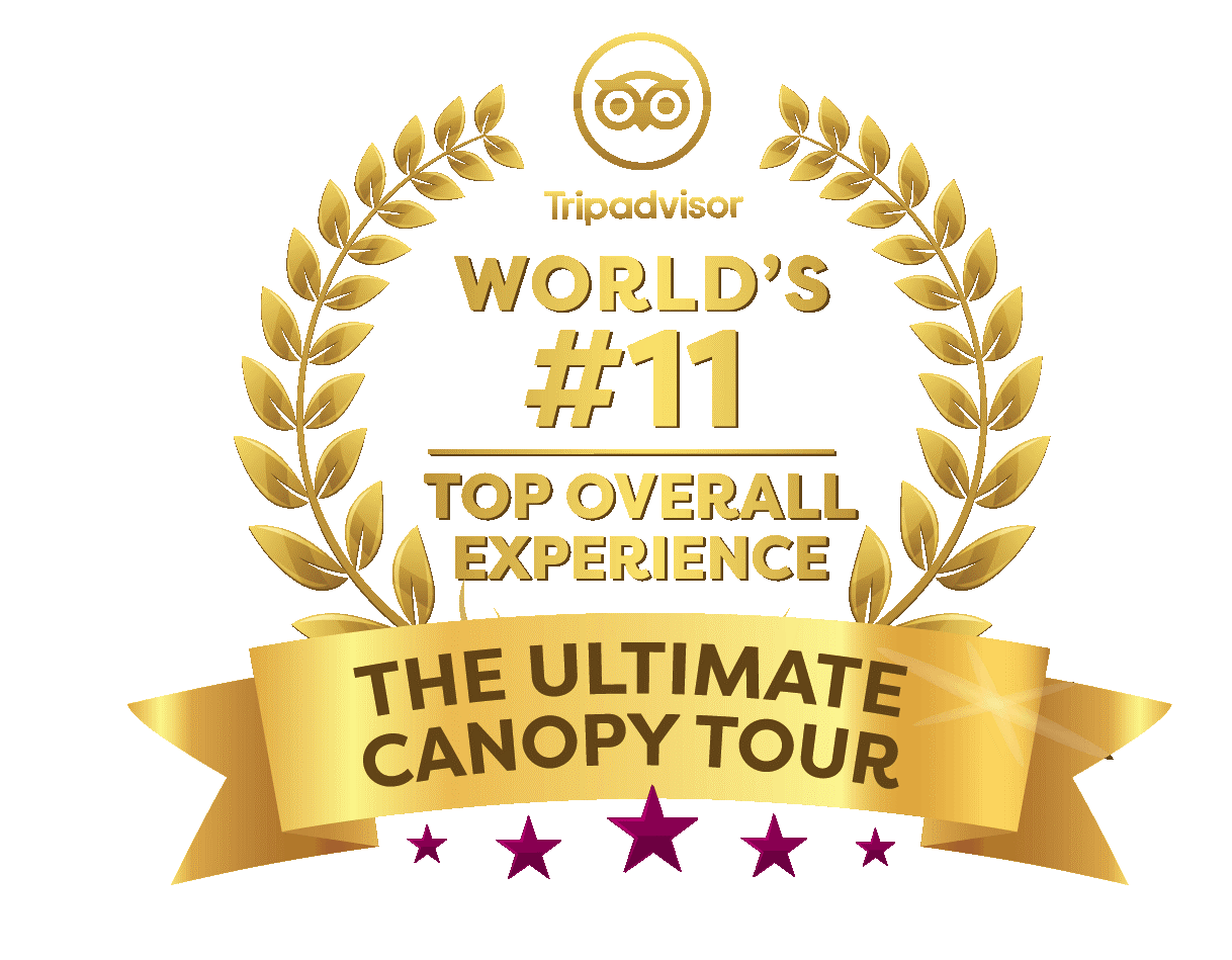 Ulltimate Canopy Tour top overall experience
